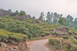 Kerala Indien - Munnar in der Nähe von Fort Kochi - likeontravel