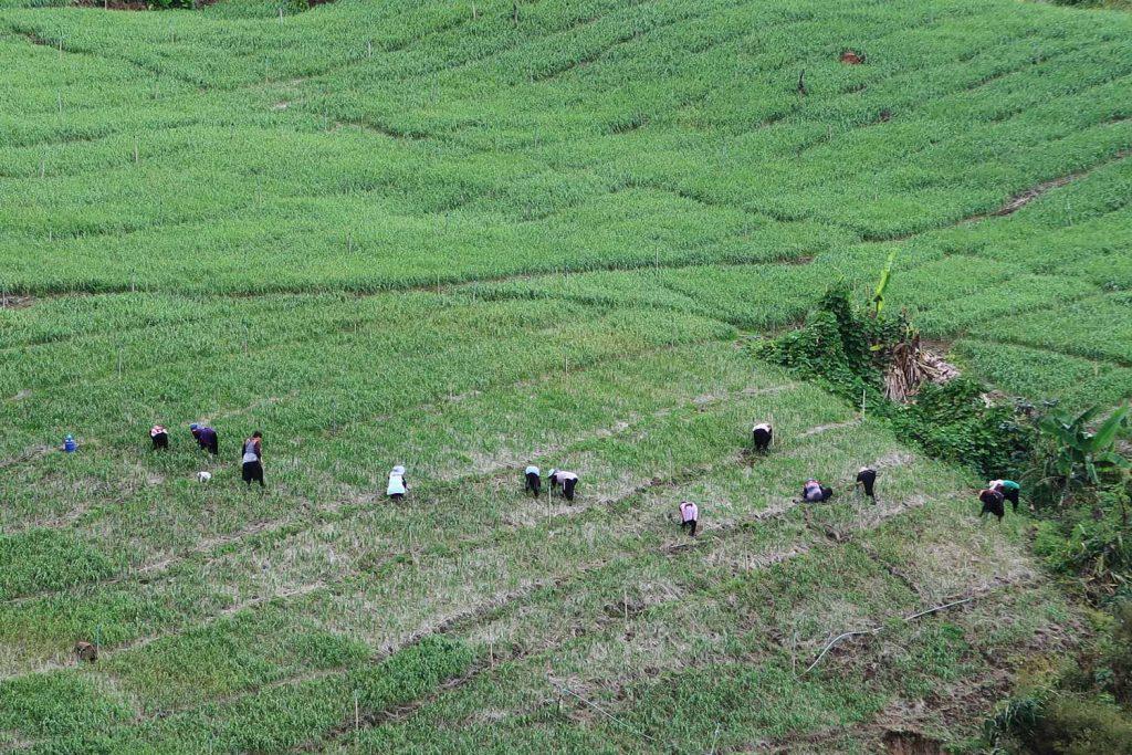 Mae Hong Son Loop Reisfelder in Thailand