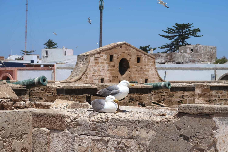 Möven auf der Tolle Aussichten auf der Sqala du Port d'Essaouira
