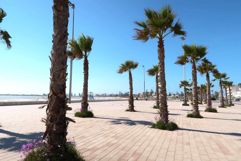 Die Strandpromenade von Essaouira mit Palmen