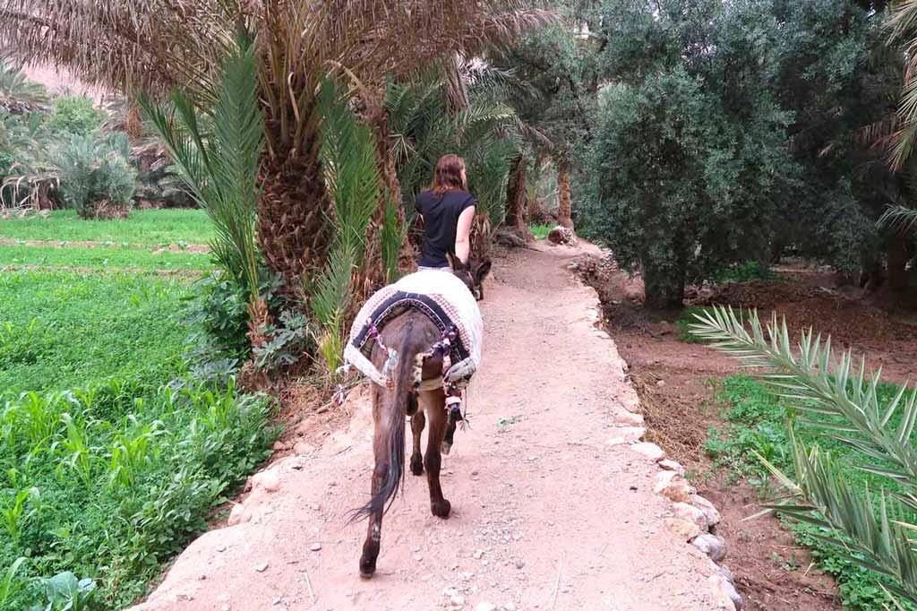 Gassi gehen mit dem Esel in der Palmerie von Tinghir likeontravel