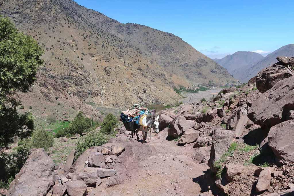 Maultiere auf dem Trekkingpfad zum Jebel Toubkal - likeontravel