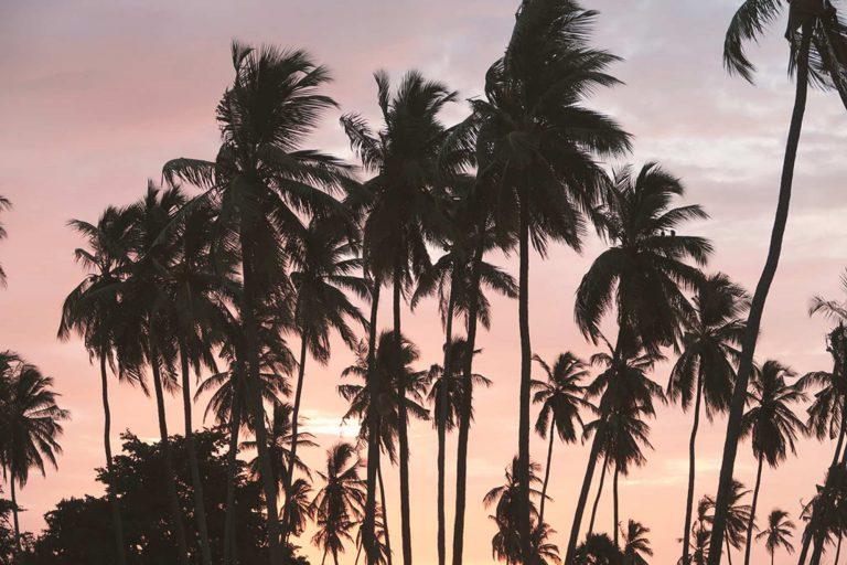 Sri Lanka Reisetipps - Banner