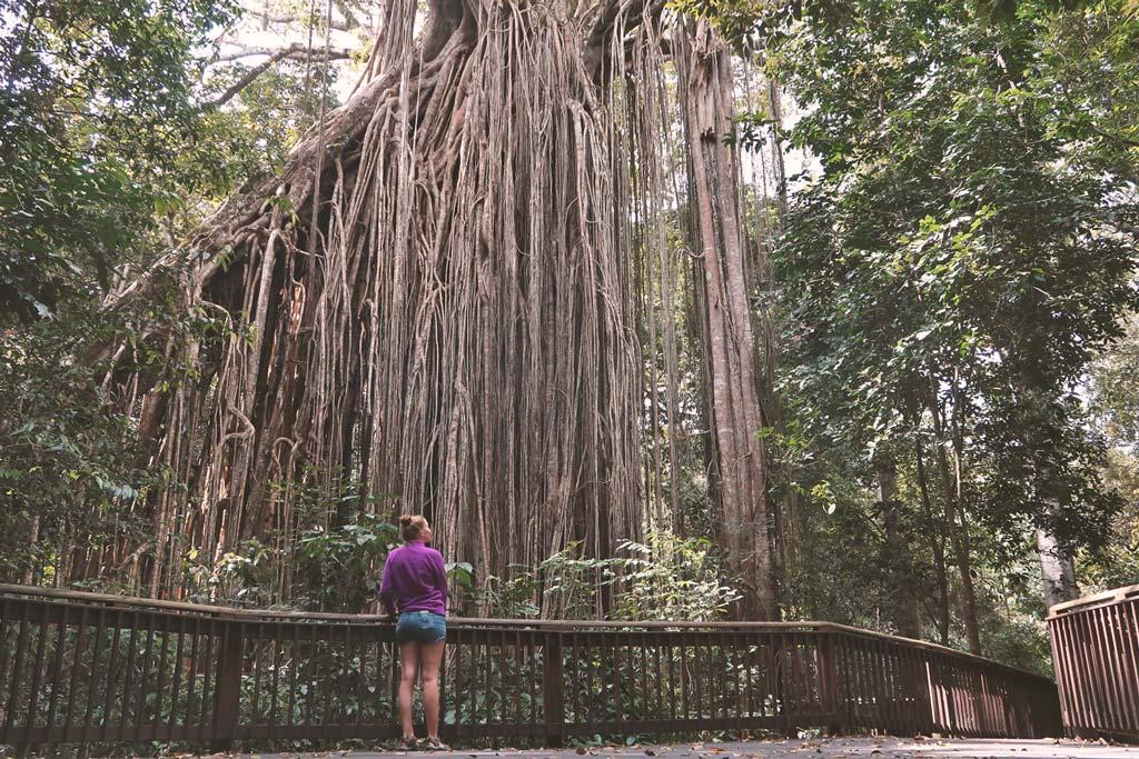 Cairns Sehenswürdigkeiten - die besten Tipps für die Stadt & Umgebung im Bundesstaat Queensland, Australien