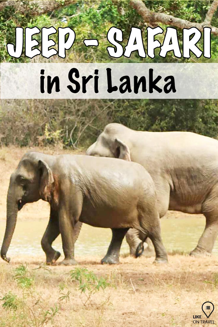 Jeep-Safari im Yala Nationalpark in Sri Lanka. Erlebe freilebende Wildtiere in ihrer Umgebung zum greifen nah! #srilanka #asien #safari #nationalpark #reisetipps #reiseblog #blog #likeontravel