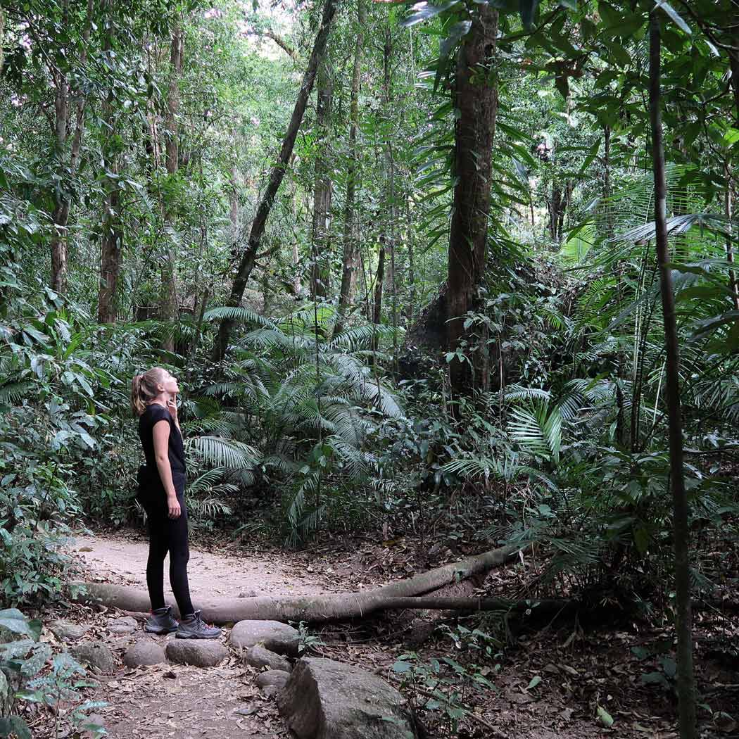 Der Daintree Forest Nationalpark