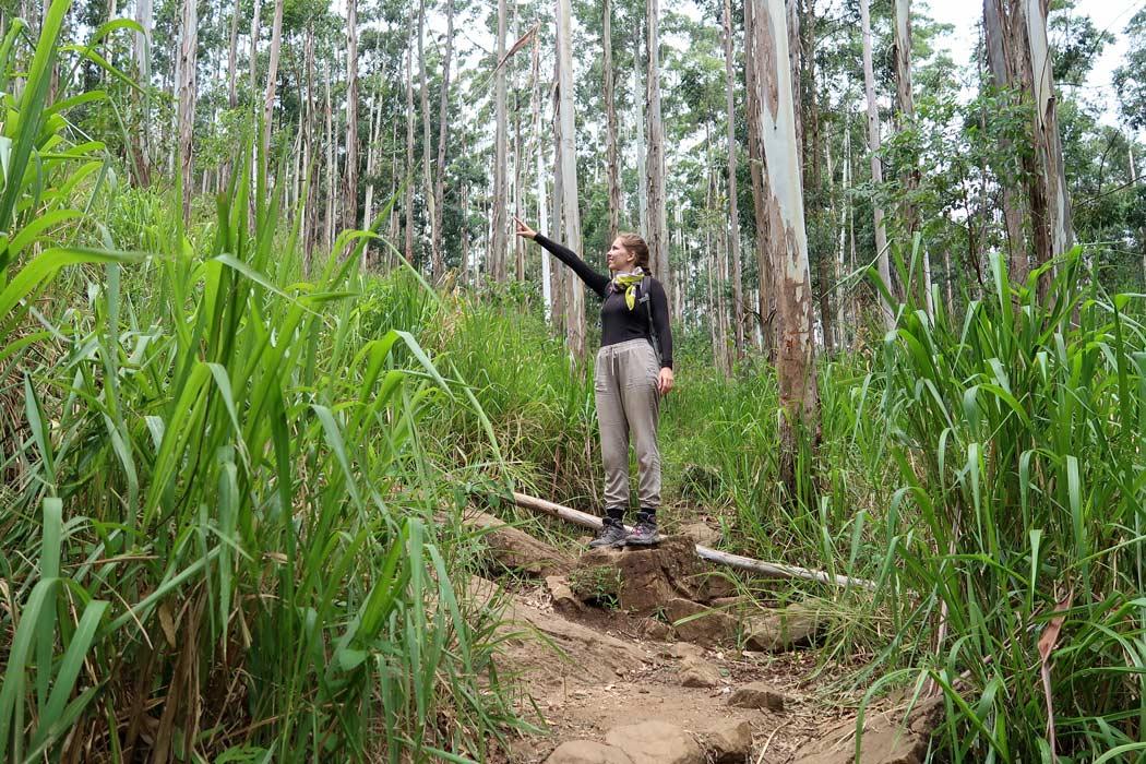 Die Wälder am Ella Rock