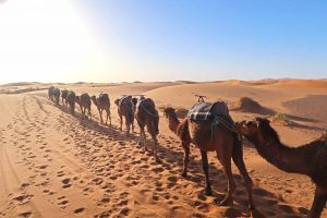 Kamelkolonne in der Sahara - Merzouga