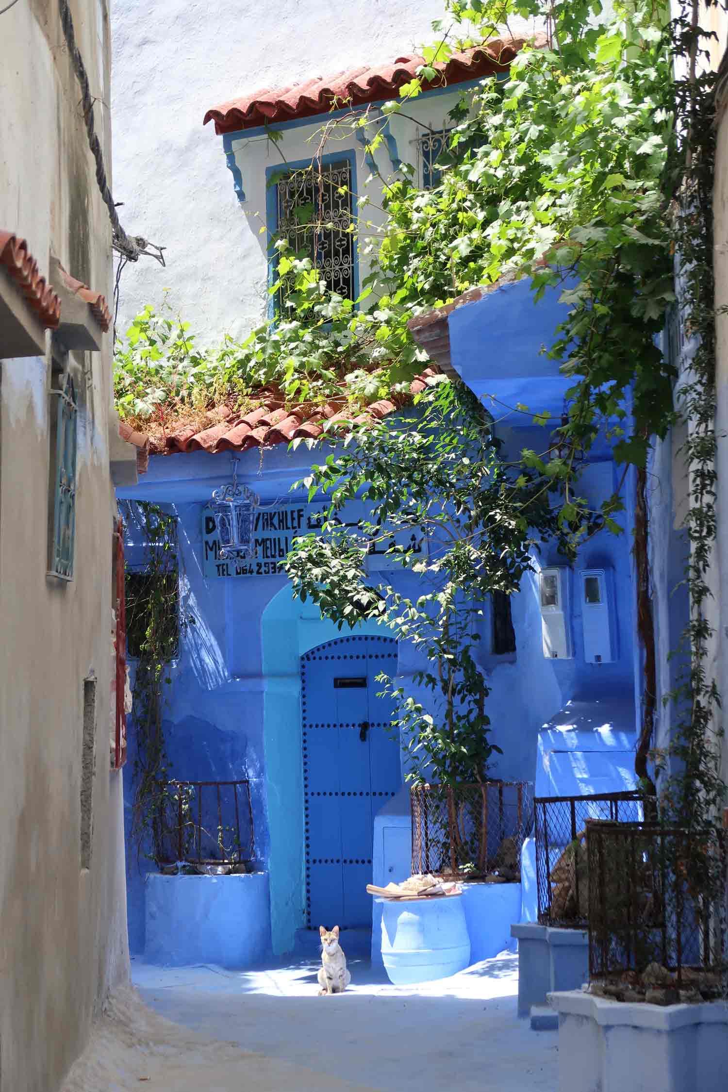 Marokko Individualreise | 2-Wochen-Reiseroute auf eigene Faust - Die Gassen von Chefchaouen