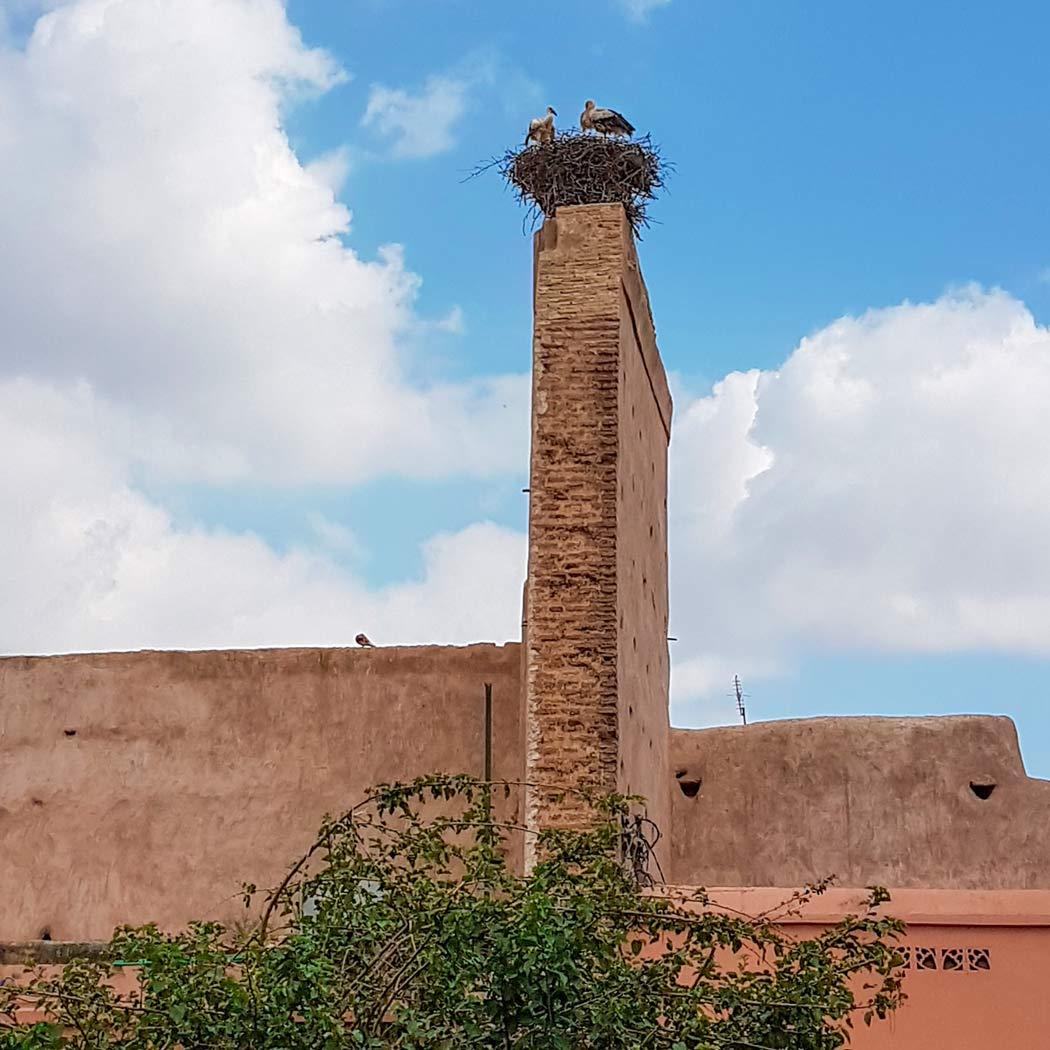 Storche nisten in Marrakesch