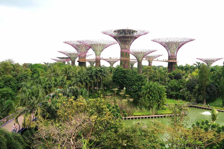 Bäume im Gardens by the bay in Singapur