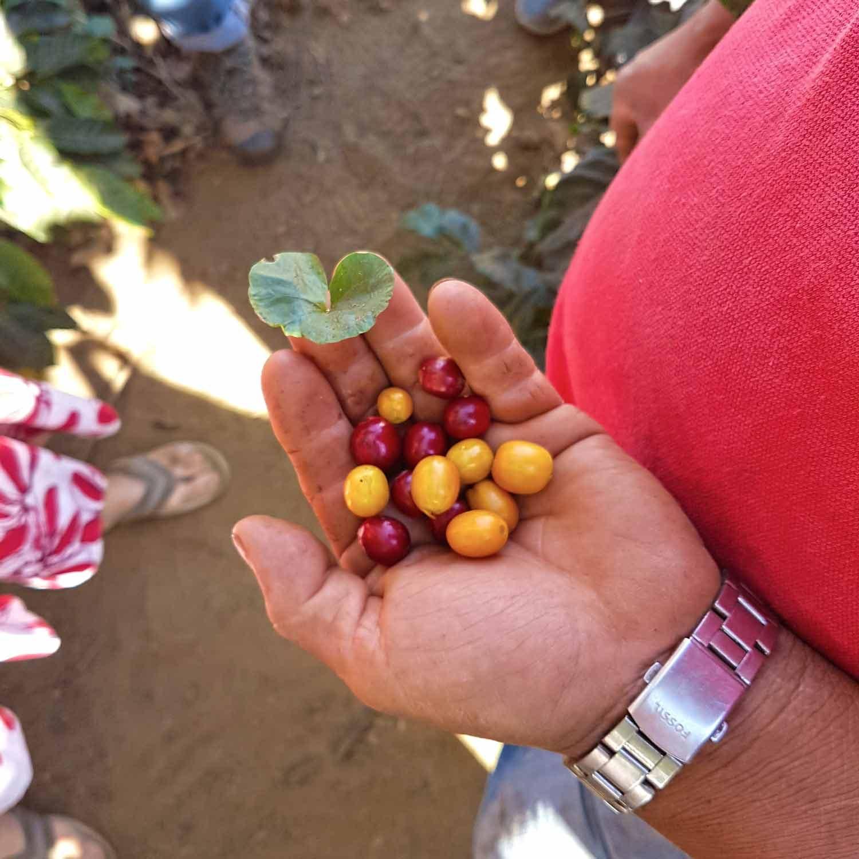 Antigua Sehenswürdigkeiten - 10 Dinge, die du machen solltest - De La Gente Coffee Tour