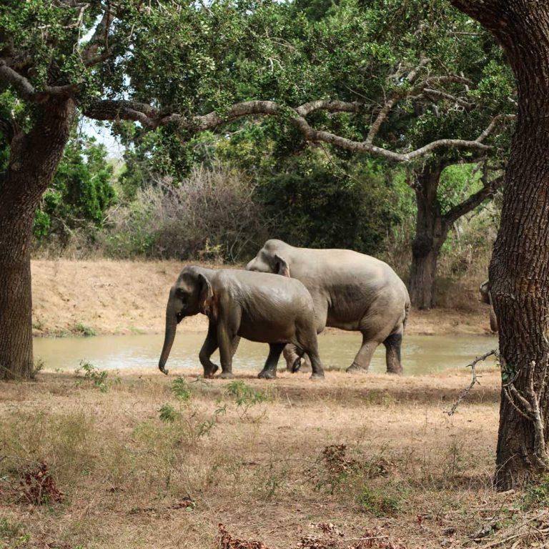 Sri Lanka Reiseroute mit Safari