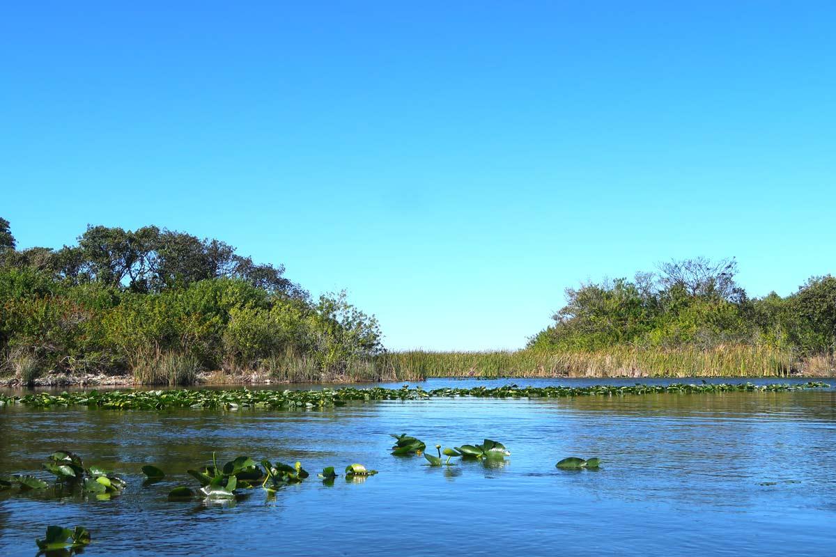 Miami Beach Sehenswürdigkeiten - 10 Dinge, die du machen solltest - Everglades Trip von Miami Beach aus