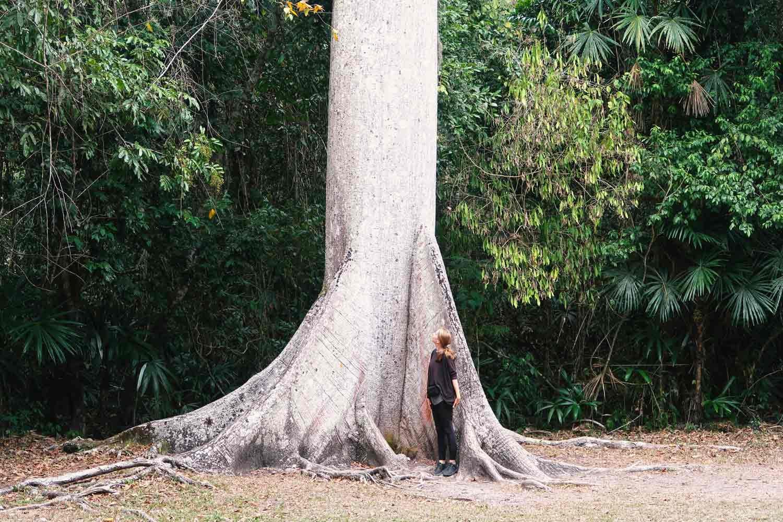 Tikal Guide - Die große Maya Stätte in Guatemala - Ceiba Tree