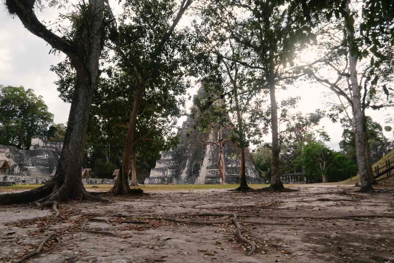 Tikal Guide - Die große Maya Stätte in Guatemala - Temple I