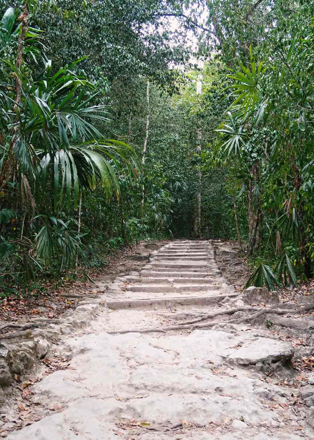 Tikal Guide - Die große Maya Stätte in Guatemala - Die Wege im NAtionalpark