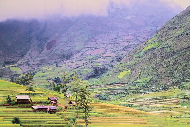 Sapa Reisfelder