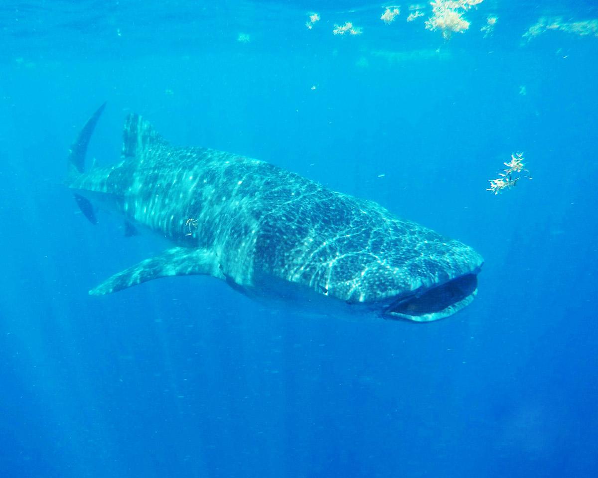 Walhaitour in Mexiko