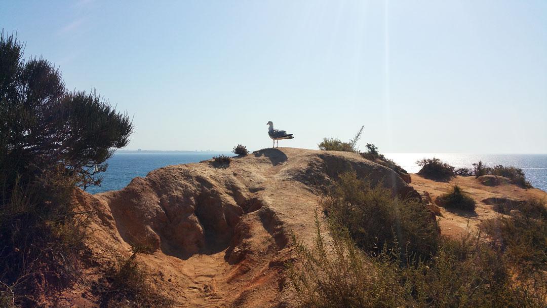 Die besten Portugal Strand Tipps für dich