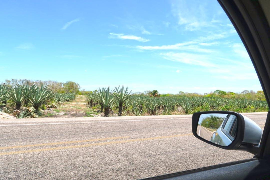 Mit dem Mietwagen sicher und mit eigenem Tempo durch Yucatan