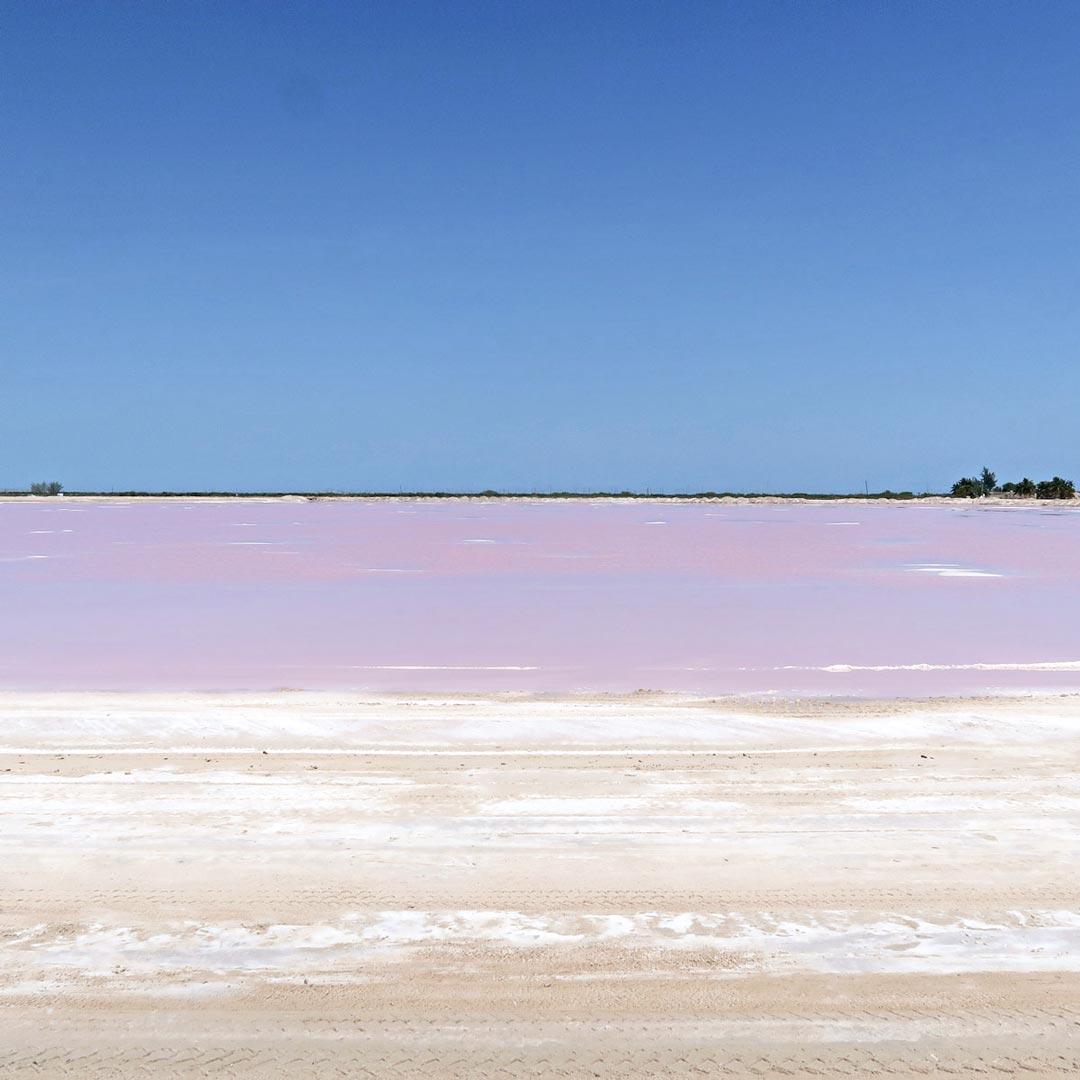 Die pinken Salzfelder gehören zu den top Tipps in Mexiko