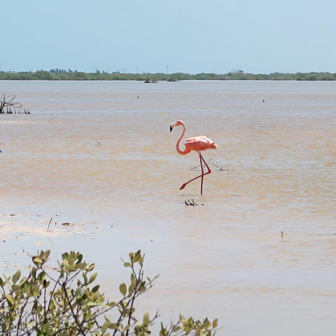Flamingos findest du in Mexiko an den pinken Salzfeldern