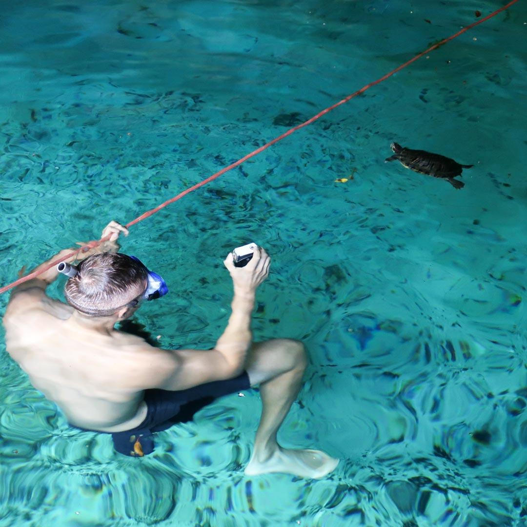 Schwimme mit Schildkröten in der Gran Cenote in Tulum