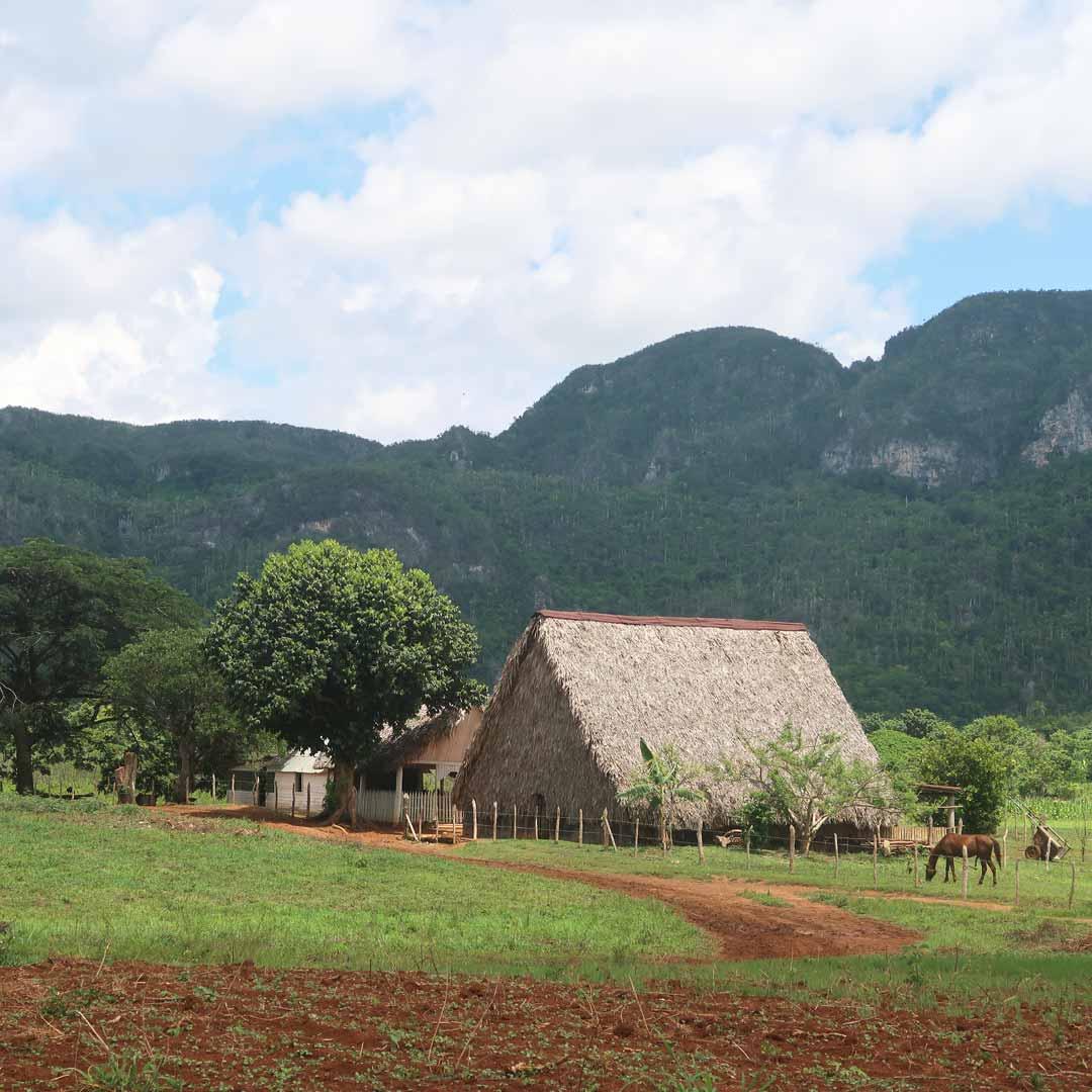 Die weltberühmten kubanischen Zigarren kommen aus dem Viñales-Tal