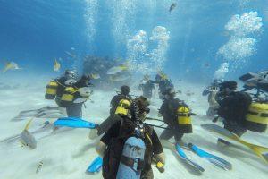 Playa Larga - Tauchen in der kubanischen Schweinebucht! Alle Infos rund um das Bucket-List-Erlebnis.