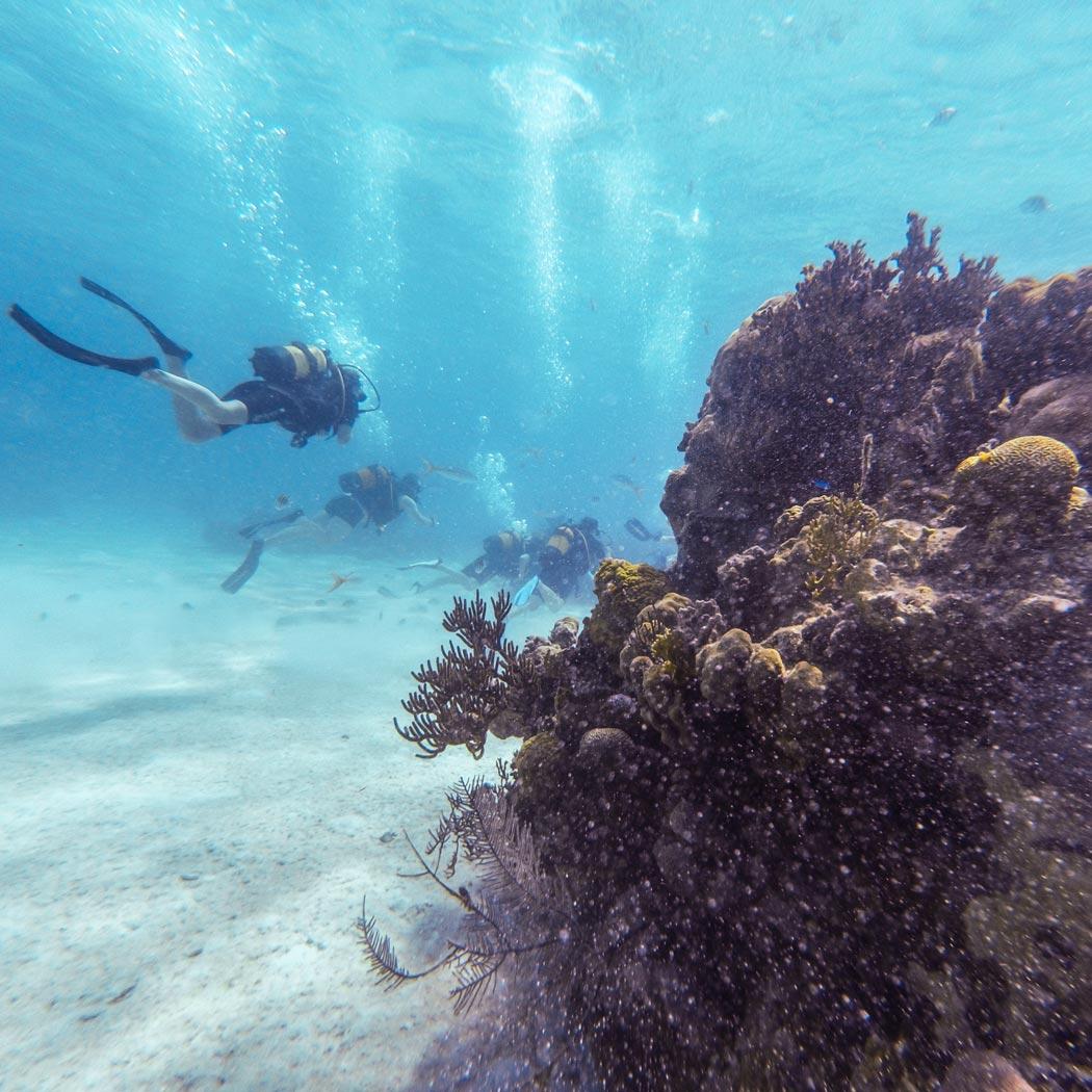 Taucher und Korallen im Karibischen Meer in Kuba
