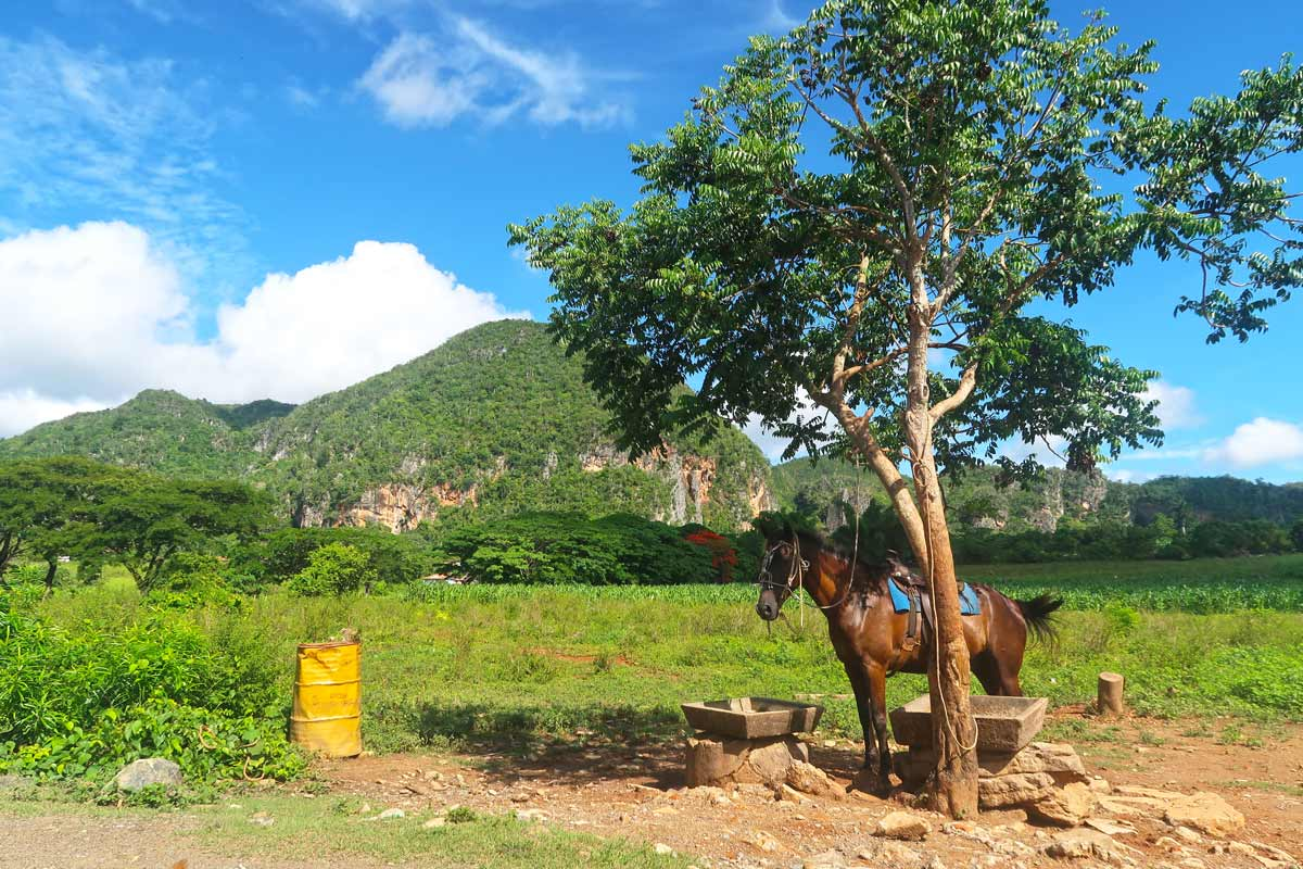 Pferdetouren sind im Vinales-Tal sehr beliebt