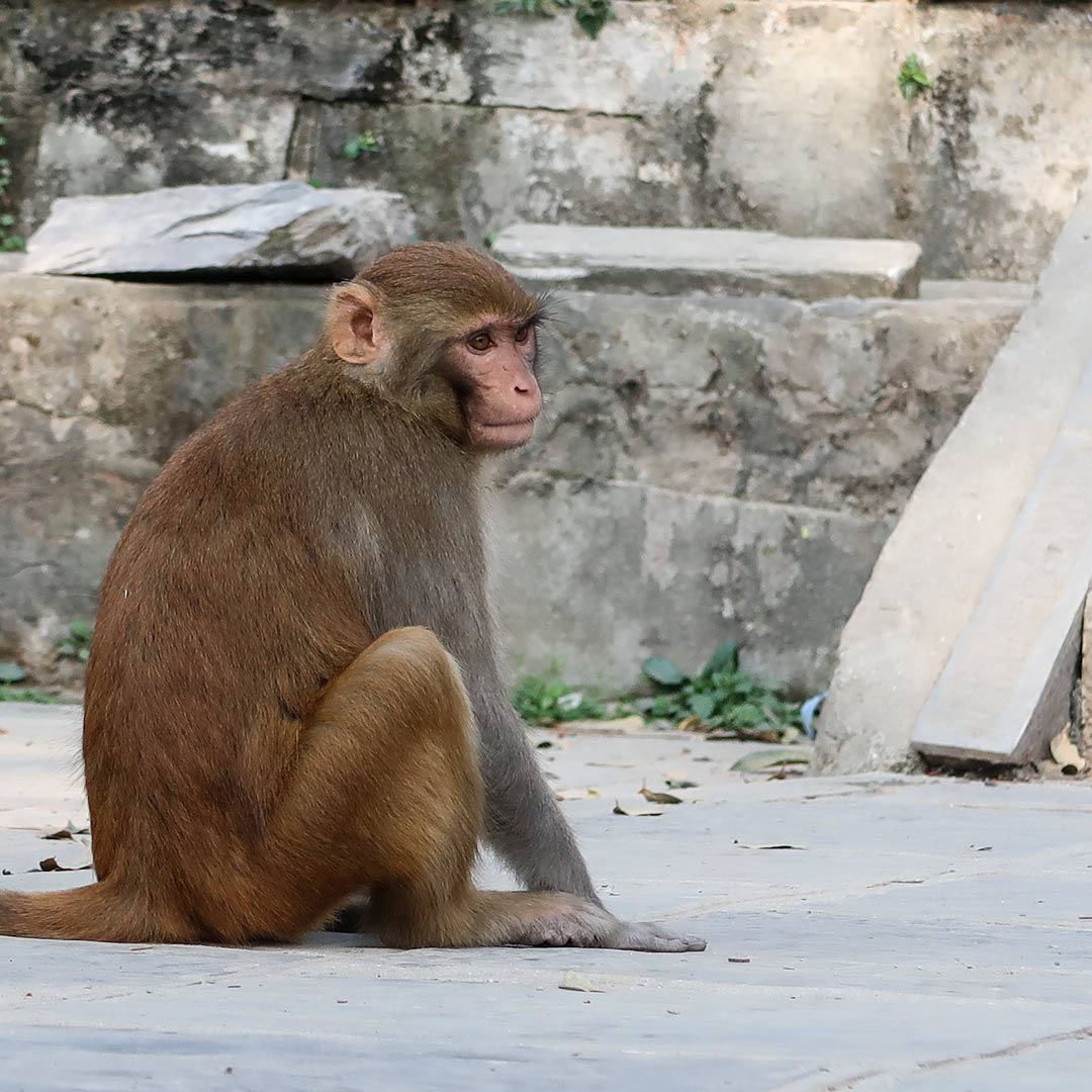 Monkey Temple in Kathmandu Nepal Reisetipps