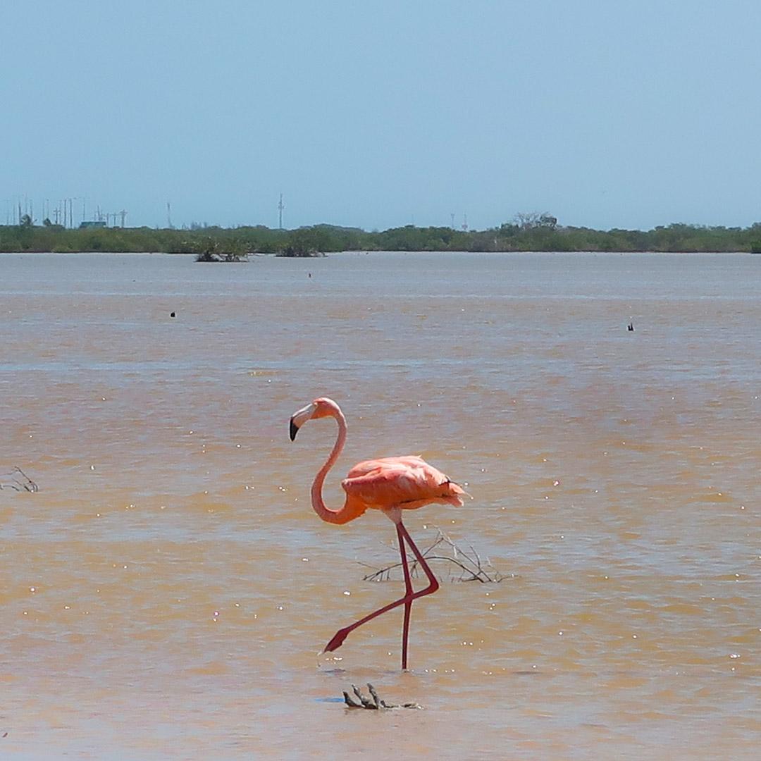 Mexiko Reisetipps Flamingos Rio Lagartos