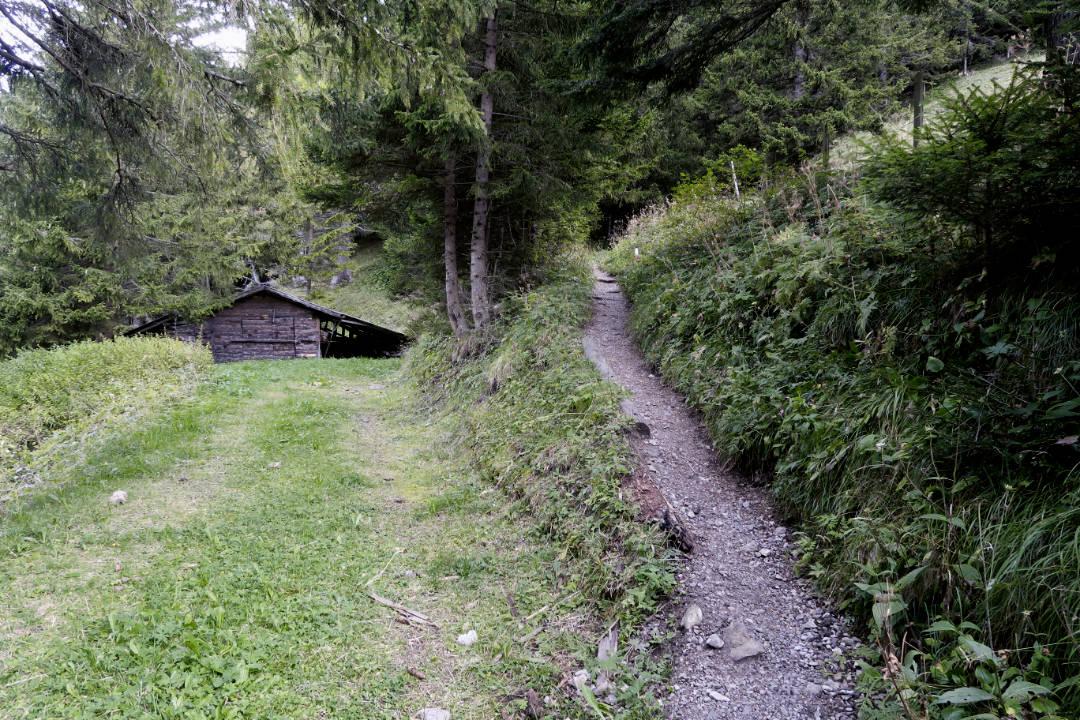 Wanderpfad im Wald mit Holzhütte